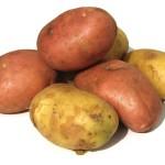 We're digging potatoes Sep 21 9:30 a.m.