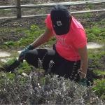 Preparation South Garden
