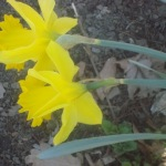 04_19_2016_spring2a