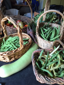 Beans and long squash